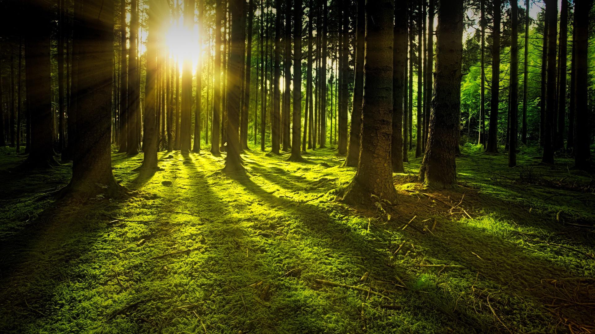 Exploring Random Forests